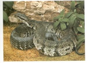 Identify venomous water snakes