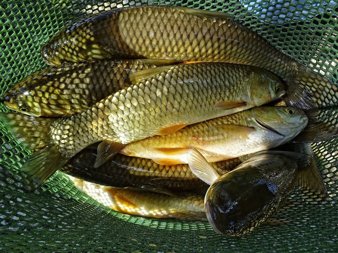 Grass carp fish farming images for Fish farms in texas